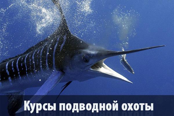 Курсы подводной охоты в Гомеле